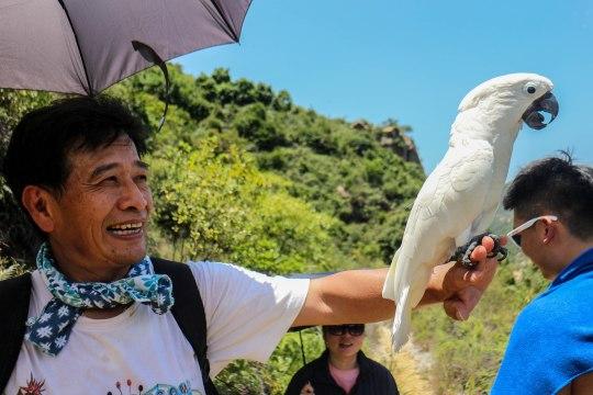 Happy Parrot man